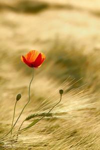 0004с - Фотодрук: Світ Шаф